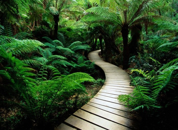 TeT_caminho_jardim_38_madeira