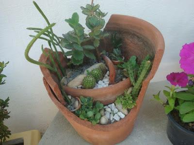 TeT_vaso_quebrado_broken_pot_3_mini-jardim