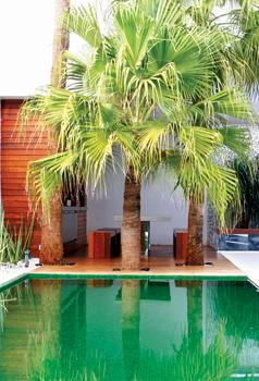 TeT_piscina_revestimento_verde_10_pastilha_de_vidro